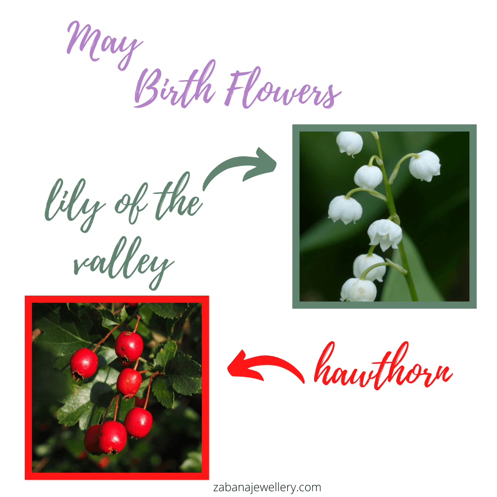 May birth flowers lily of the valley and hawthorn