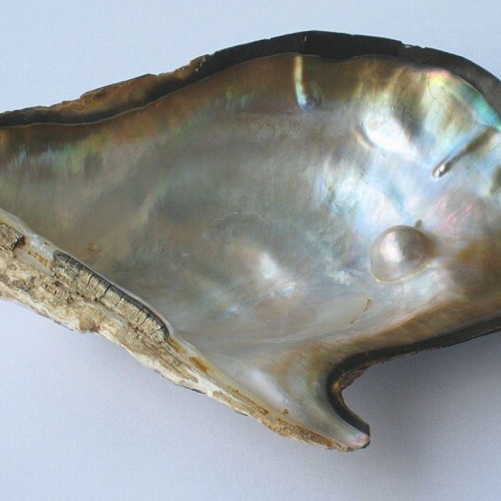 June Birthstone Pearl Oyster Shell